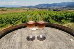 Trakya Şarap ve Bağ Gezisi 29-30 Temmuz 2017