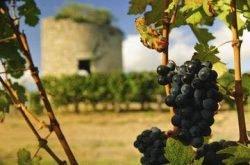 MasterClass Tasting - Bordeaux - The Medoc