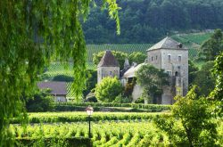 Master Class - Burgundy Şarapları Tadımı