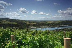 Rhone şarapları