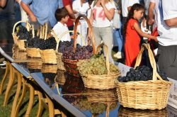 4. Trakya Bag Bozumu ve Ekoloji Festivali